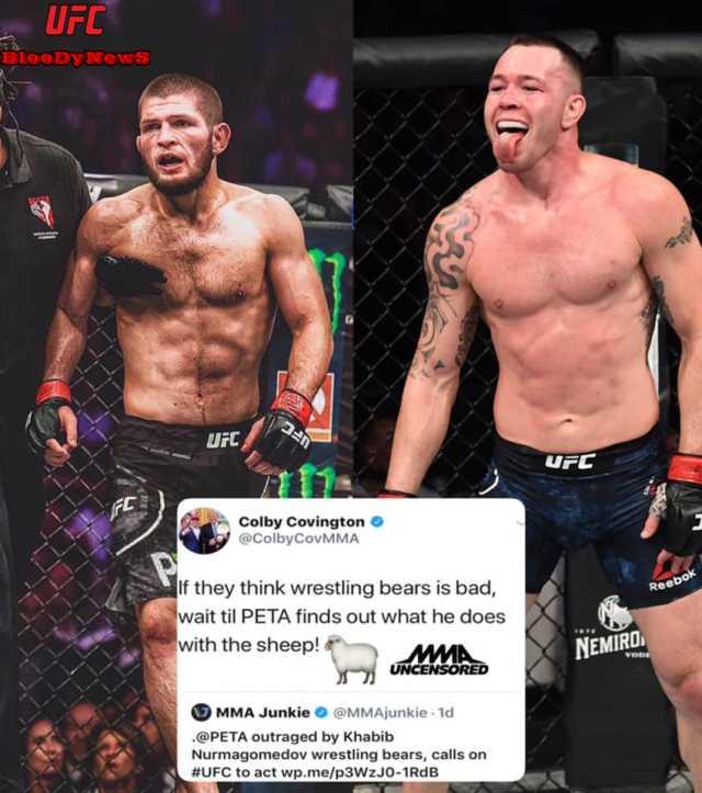 UFC-43